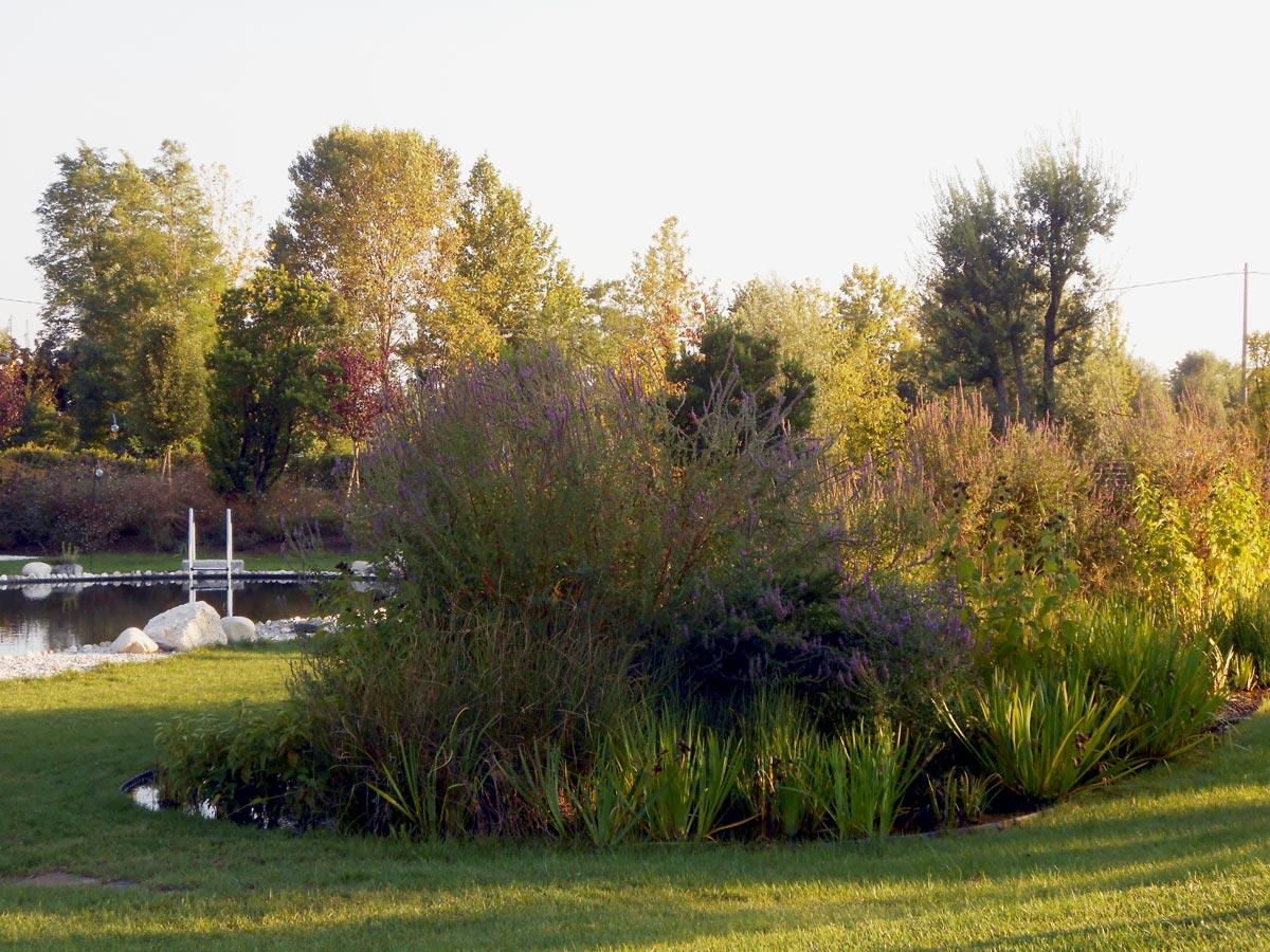 Lago biotopo - GreenVeronica